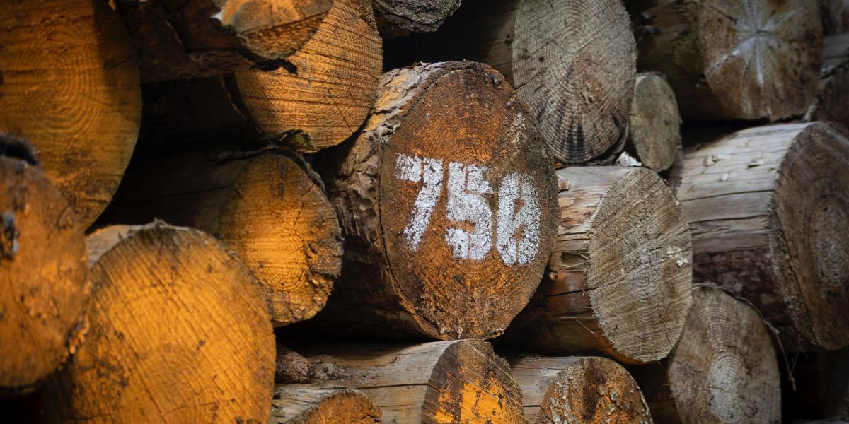 Gozdna proizvodnja