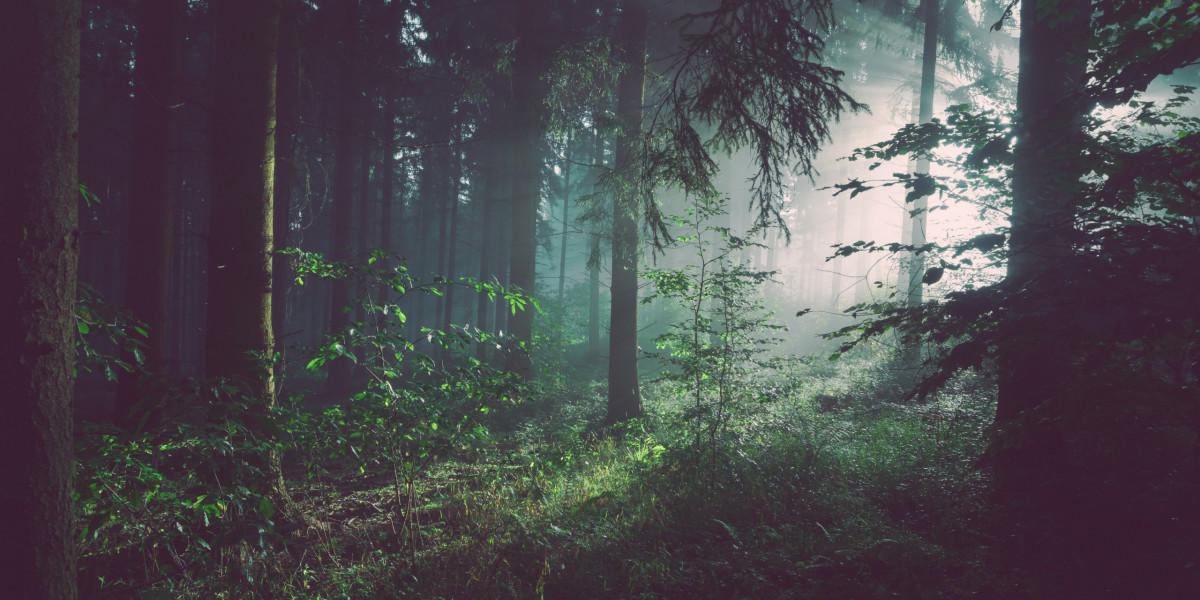 Gozdnogojitvena in varstvena dela